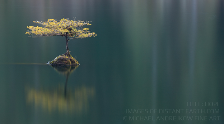 Vancouver Island Fine Art luxury home decor tree lake Michael Andrejkow