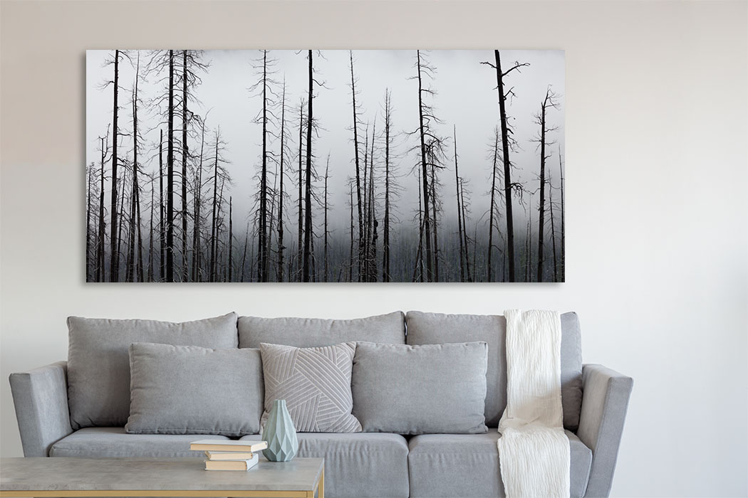 Last Stand Canadian Rockies Fine Art Trees Home Decor artwork Michael Andrejkow