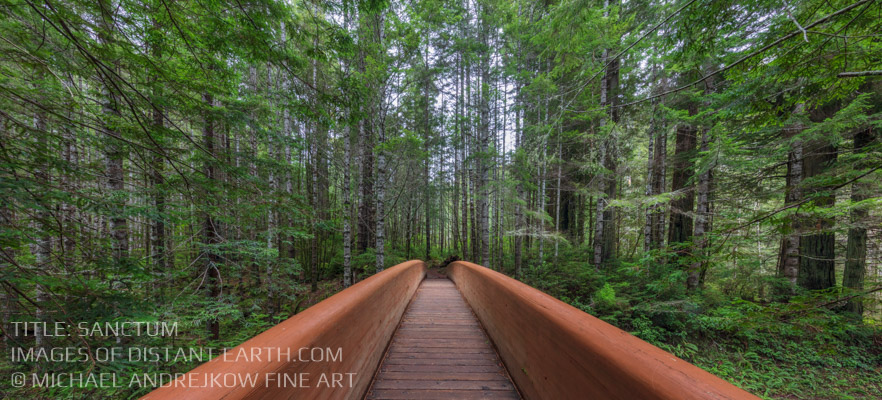 Luxury Fine Art Home decor artwork wooden bridge rainforest trees Michael Andrejkow