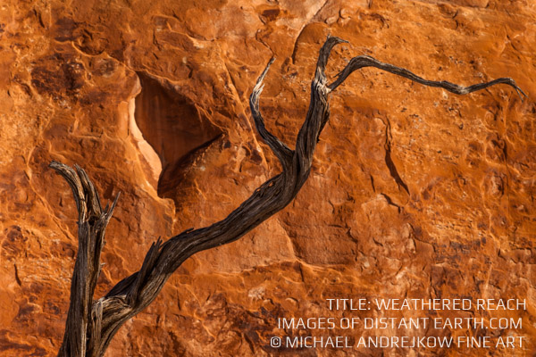 Utah Fine Art Photography Tree Limb Sandstone Cliff Luxury Home Decor Weathered Reach Michael Andrejkow