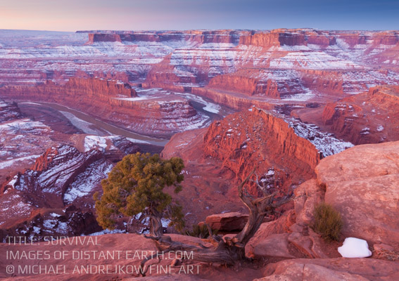 Utah Moab Fine Art Photography Prints for sale Juniper Tree Colorado River Mesa Desert Southwest Artwork Luxury Home Decor Michael Andrejkow