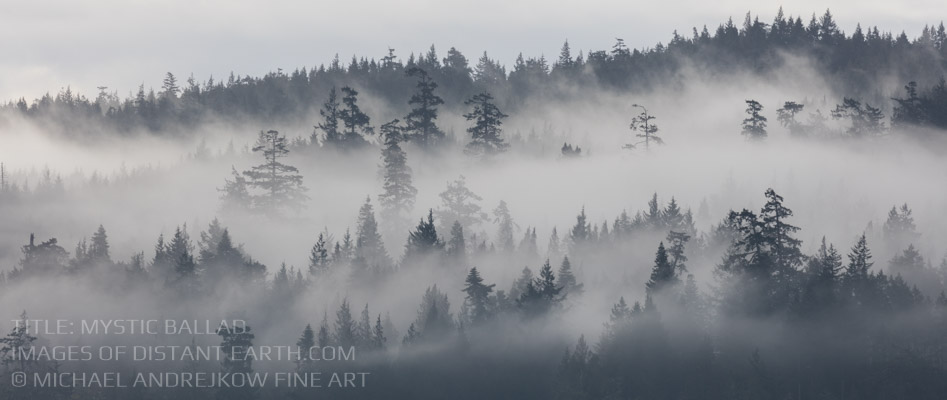 Vancouver Island Fine Art Mist Fog Trees Luxury home decor Michael Andrejkow