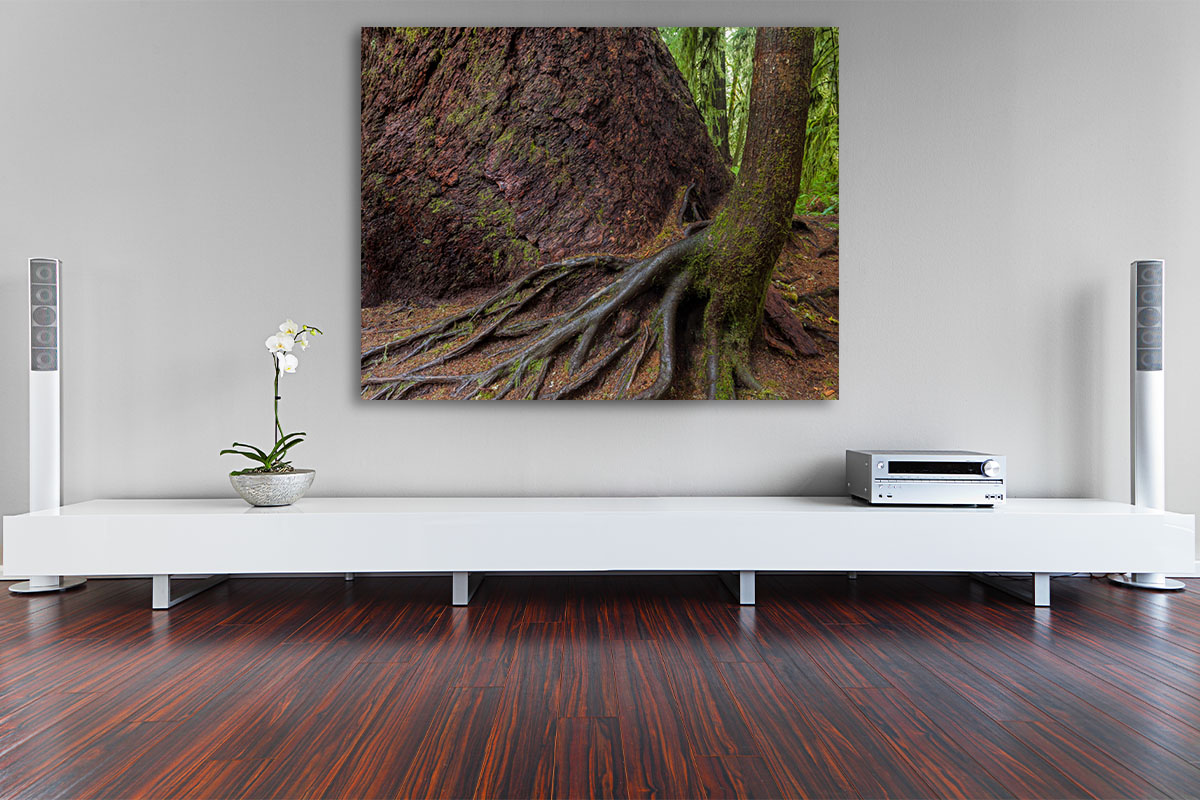 Vancouver Island Fine Art Old Growth Rainforest Tree Luxury home decor and Interior Design Michael Andrejkow