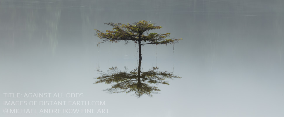 Against All Odds Luxury Fine Art Prints Tree Lake reflection Michael Andrejkow artwork